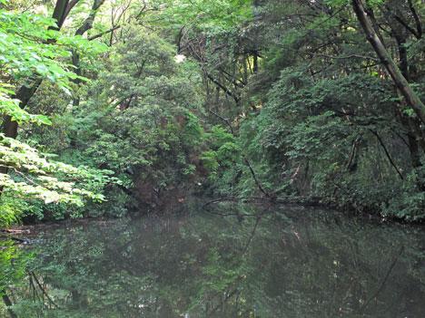 自然教育園 ひょうたん池